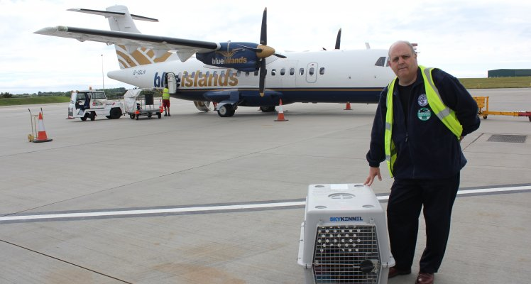 Blue Islands flies rescued seal pup to UK for treatment and rehabilitation